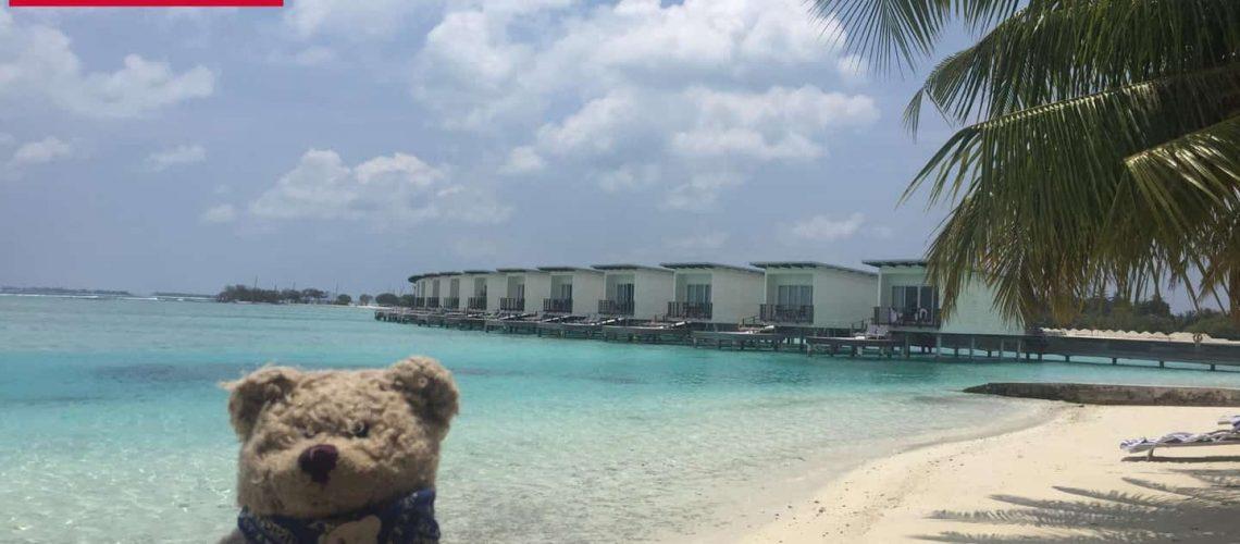 Weltreisebär Malediven